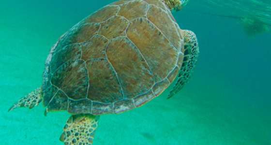 marine-turtle-tour-cancun-mexico