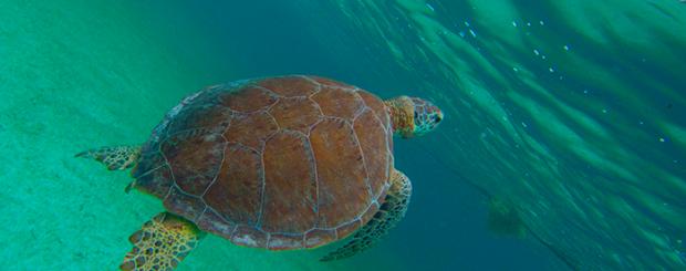 marine-turtle-tour-cancun-mexico-nature-aventure