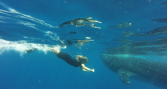 snorkel with whale sharks cancun mexico