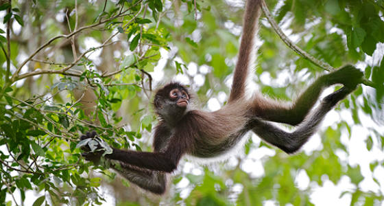 Jungle Expedition Spider Monkey Tour