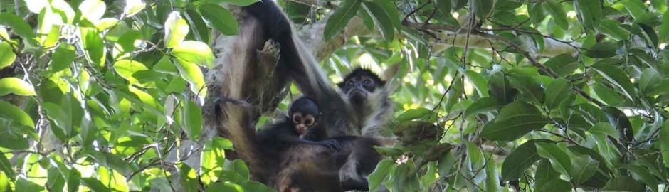 jungle expedition spider monkey tour spider monkey