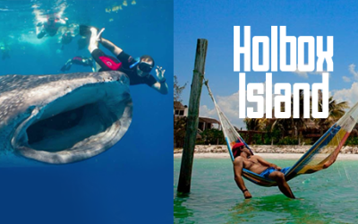 Whale shark tour holbox