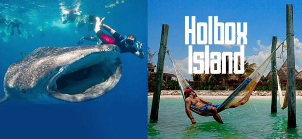 Whale shark tour holbox