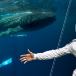 Real Madrid icon player swimming with whale sharks in Mexico