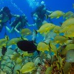 cozumel reef in the top 10 best