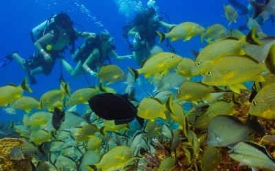 cozumel reef in the top 10 best