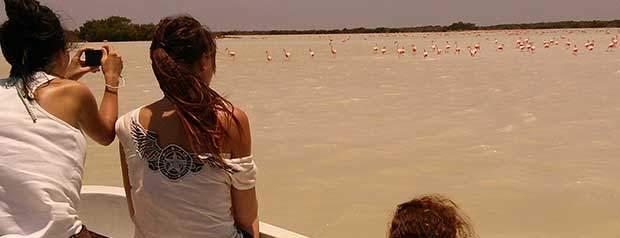 Ideal Mexican destination to start a spectacular Yucatan trip Rio Lagartos Tour