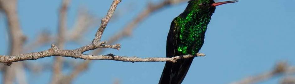 Birdwatching Cozumel Island Mexico