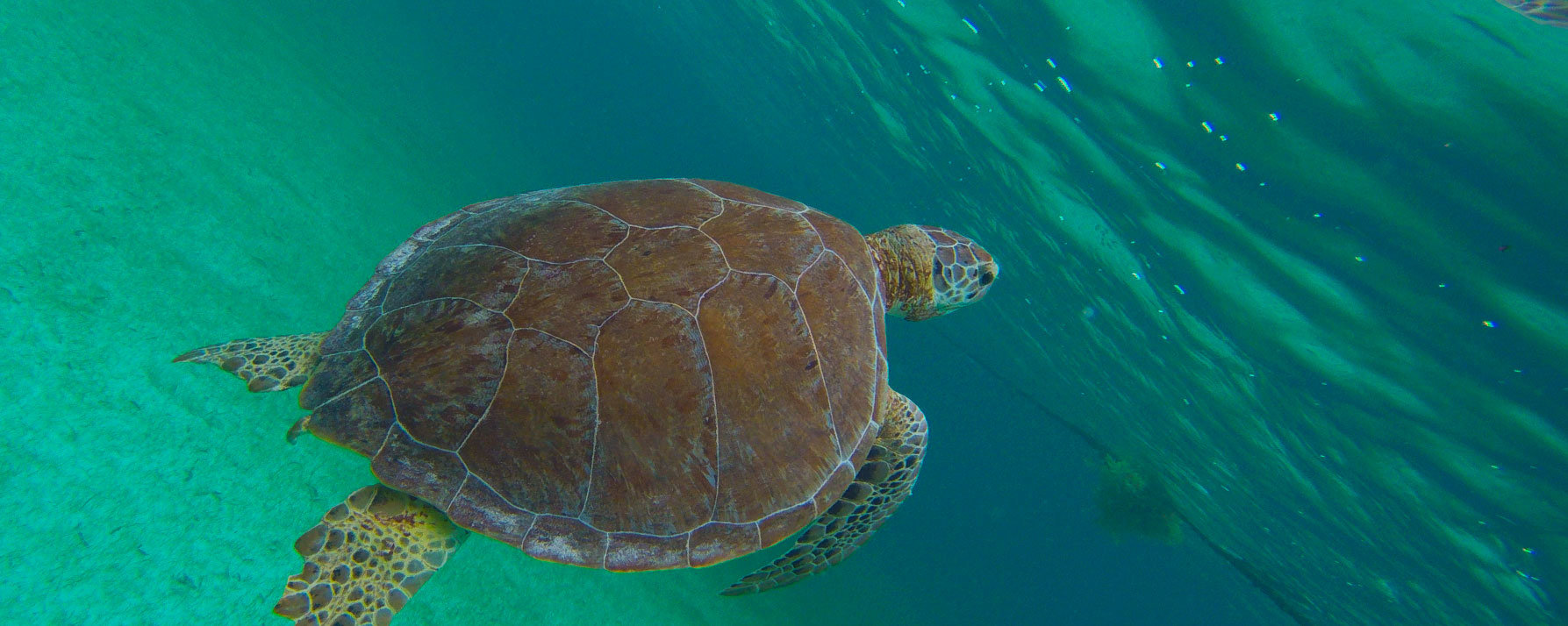 marine turtle tour cancun