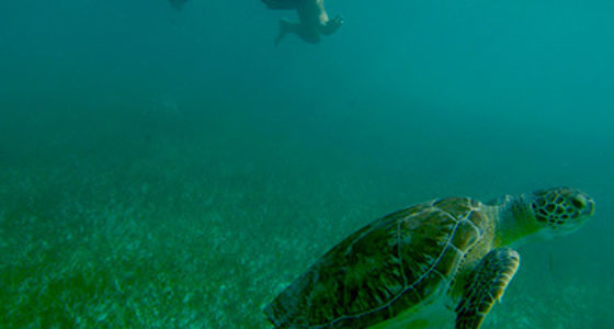 Marine Turtles Snorkel Tour From Cancun and The Riviera Maya