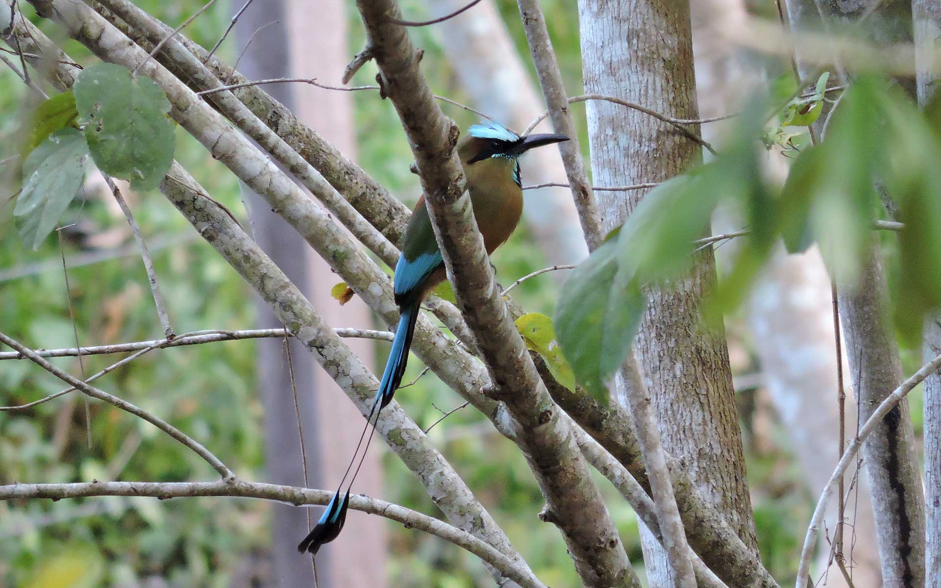 birding-cancun-riviera-maya-mexico