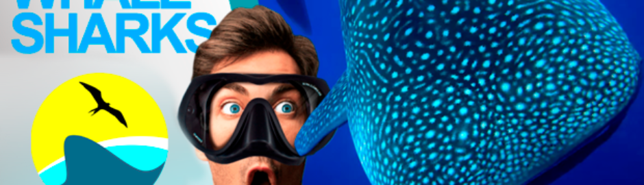 Whale shark Cancun Mexico snorkel tour