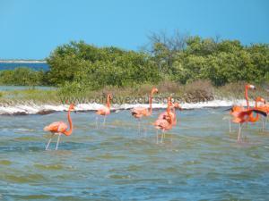 flamingos-las-coloradas-yucatan
