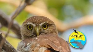 bird-watching-small-group-tour-cancun-riviera-maya