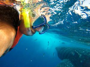 closer-look-whale-shark-tour-cancun